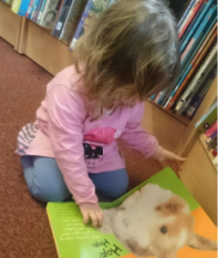 bear library